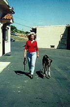 Heel off leash, pic 2 : Karen and her dog, Sepp demonstrate effective Dog Training